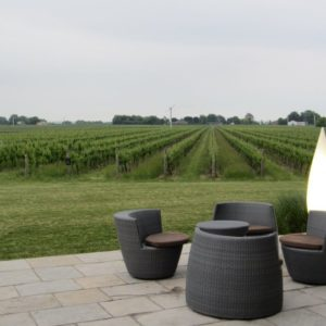 The Patio overlooking the vineyard