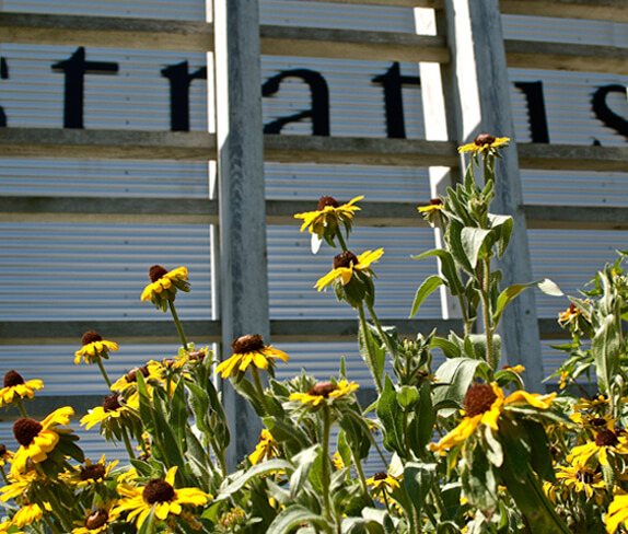 Flowers bloom in the sun in front of the Stratus winery sign